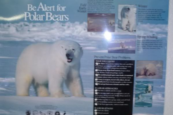 Polar bear signs!