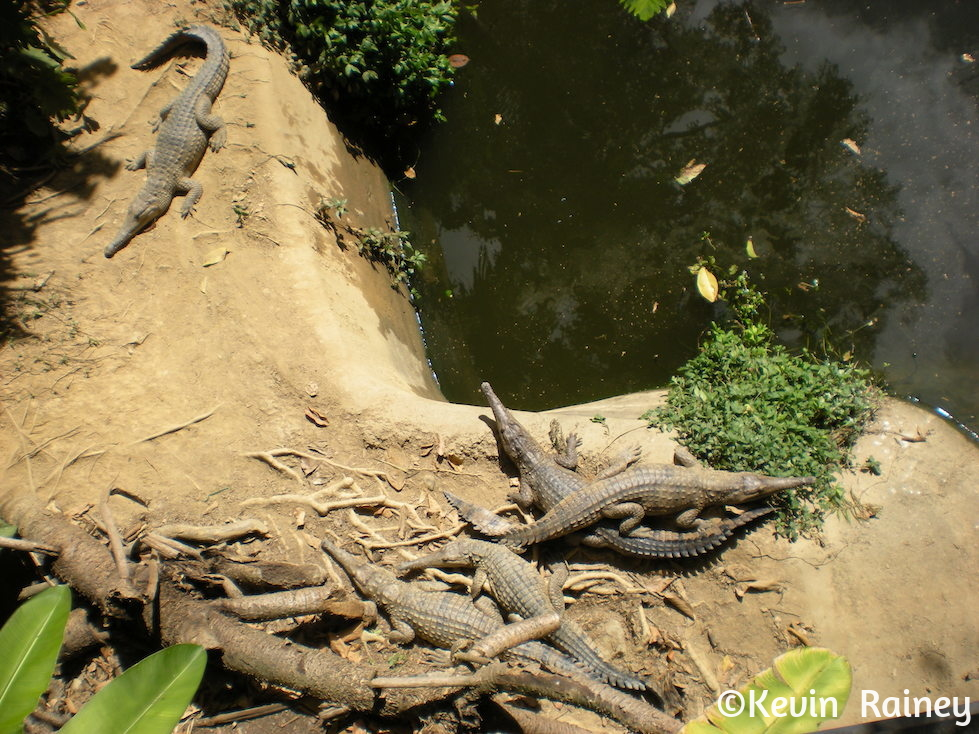 Pack of crocs