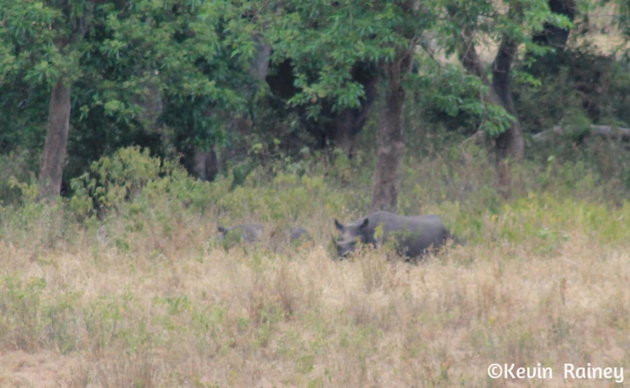 Rhino sighting!